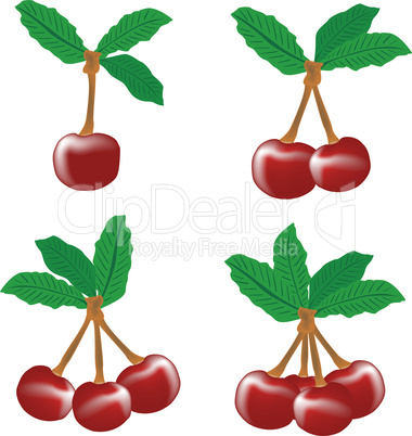 perfect sweet cherries with the leaf isolated