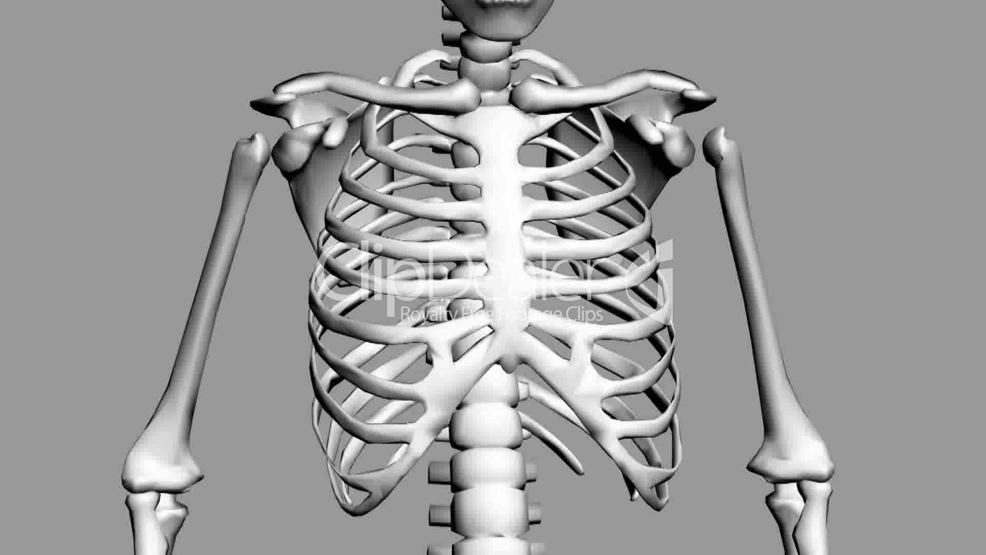 rotation of 3d skeleton ribs chest anatomy human medical x ray clip art hand x ray clip art black and white