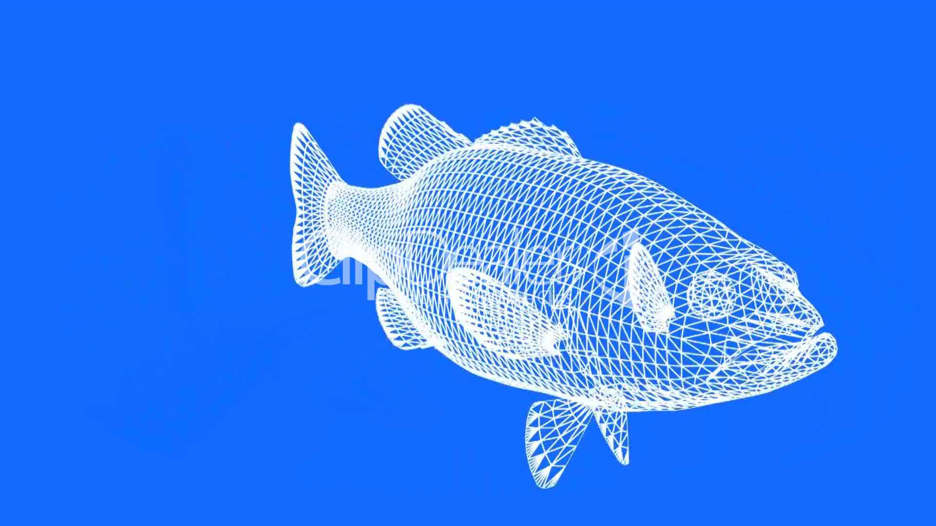 Moving of 3d for Sea water fish