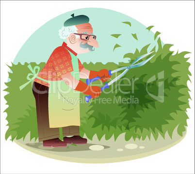 The old gardener working in the garden cutting the bushes