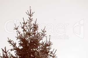 Retro look Pine tree