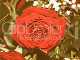 Retro looking Rose picture