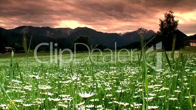 Blumenwiese am Abend