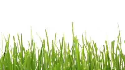 wachsendes Gras