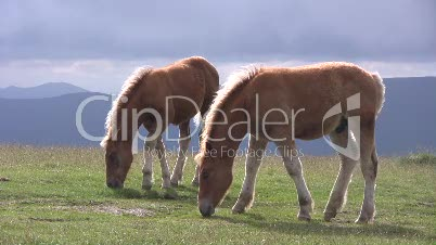 Pferde in den Pyrenäen