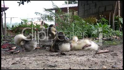 Entenbabys und Entenmutter