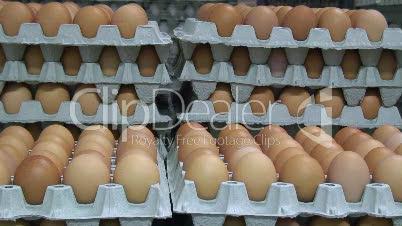 Eierfabrik 1