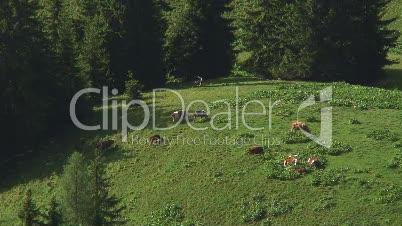 Landschaftsaufnahme mit Kühen