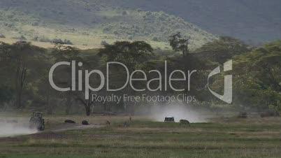 Wildlife im Ngorongoro-Krater in Tansania