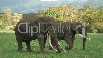Elefanten im Ngorongoro-Krater-Garten Eden