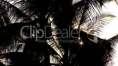 Backlit Palm Tree