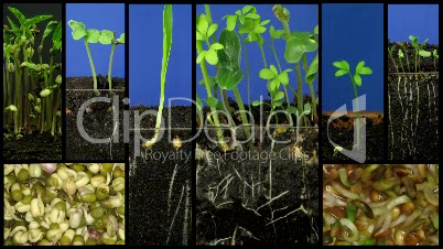 Montage of growing vegetables time-lapse 1