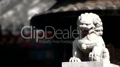 White chinese lion