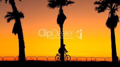 Fahrradfahrer unter Palmen bei Abendrot