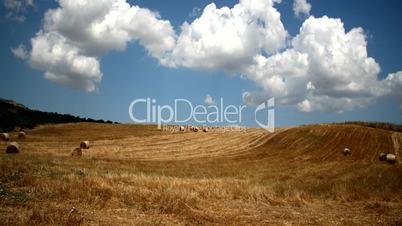 Field Of Dry Grass