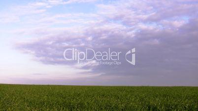 field, grass, sky...