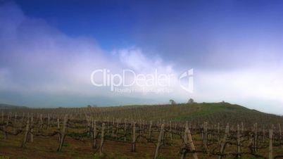 Vineyard against running clouds.
