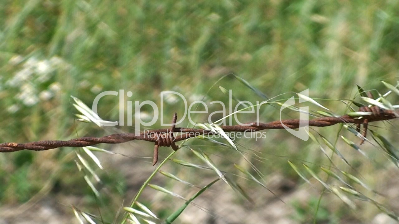 Barbed wire fence in a field: Royalty-free video and stock footage