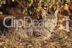 Katze im Gras 2