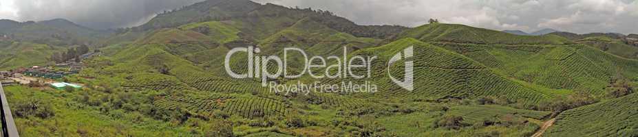 Cameron Higlands, tea plantation