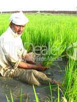 old man in rice paddy field