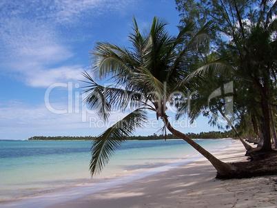 Karibikstrand Palme