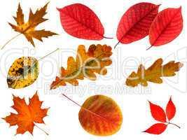 Isolated autumn leaves.