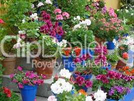 Blütenpflanzen auf Treppe