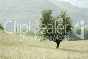 typische Landschaft in der Provence
