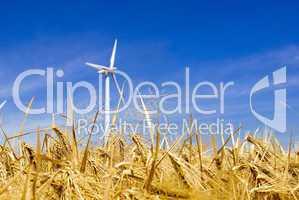 Getreidefeld mit Windrad