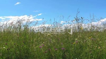 Wiese/Gras