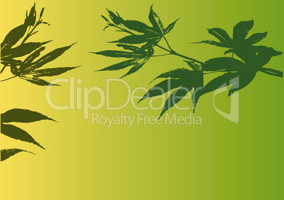 maple background green