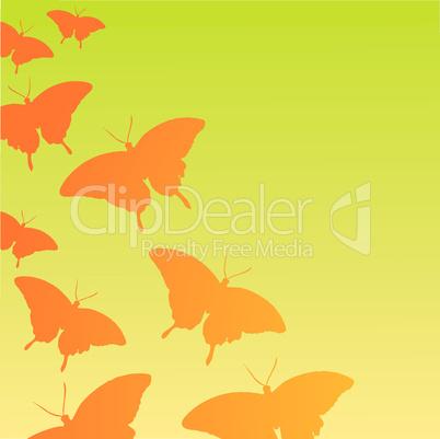 orange butterflys