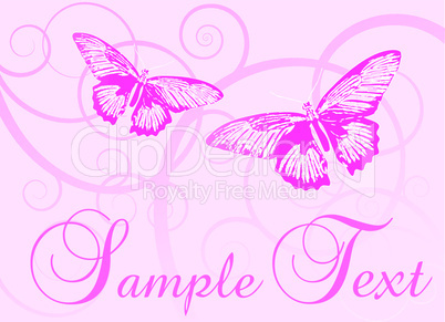 pink butterflys illustration