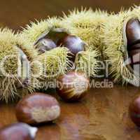 chestnut still life