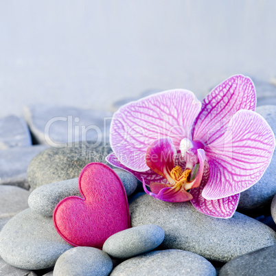 pink heart and orchid