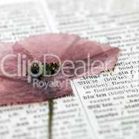 flower on dictionary