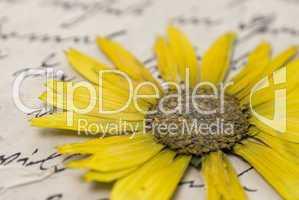 pressed flower on letter