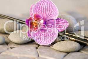 orchid on pebble