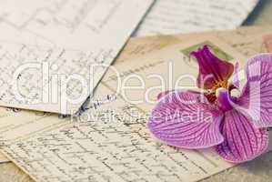 orchid on letter