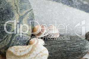 Still-life with snail shells
