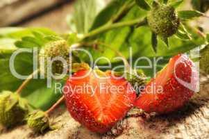Erdbeere reif und unreif