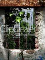Pflanze und zerbrochenes Fenster