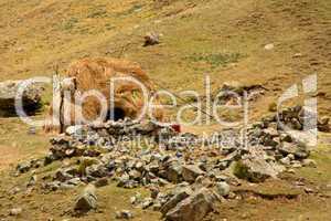 Strohhütte im Andenhochland