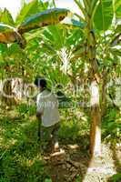 Bauer mit Bananenstaude