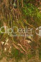 Wurzeln im Regenwald