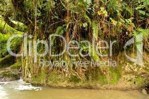 Fluß im Regenwald