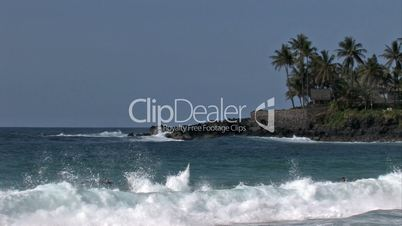 Surfer im Meer / Palmenstrand - Waimea Bay