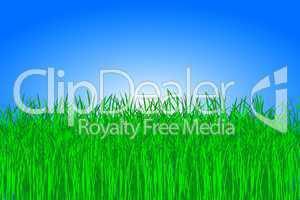 Rasen Wiese vor blauem Himmel