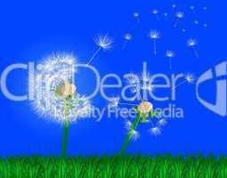 Rasen Wiese mit Blume vor blauem Himmel